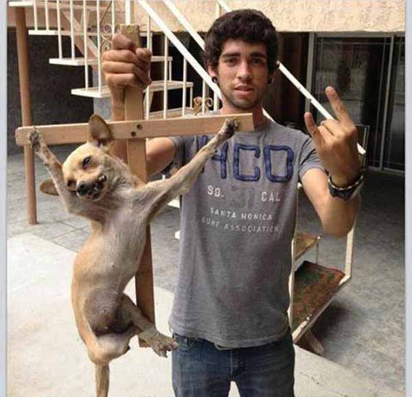 In Malta hängen Muslime ans Kreuz genagelte Hunde und Katzen an die christliche Kathedrale. #Date:05.2016#