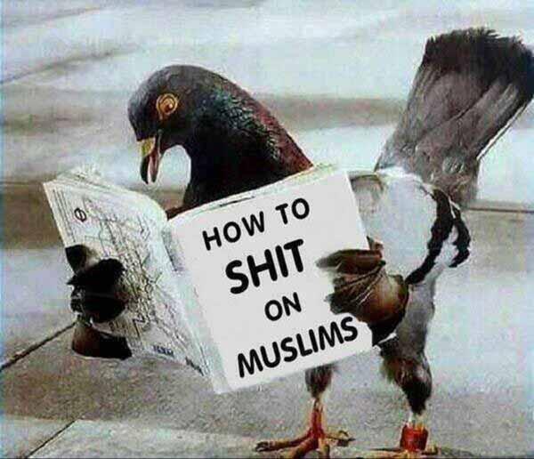 Wie man auf den Islam scheißt. Kein Problem für Taube #Date:12.2015#