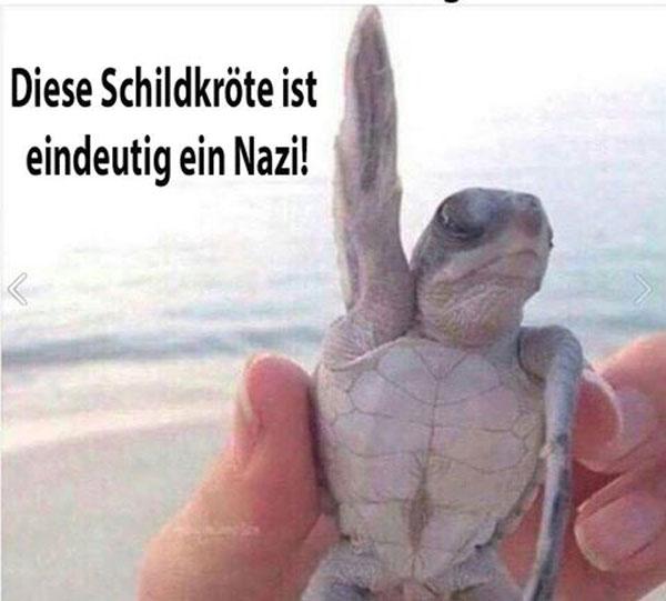 Auf frischer Tat ertappt. Diese Schildkröte ist eindeutig ein Nazi #Date:08.2016#