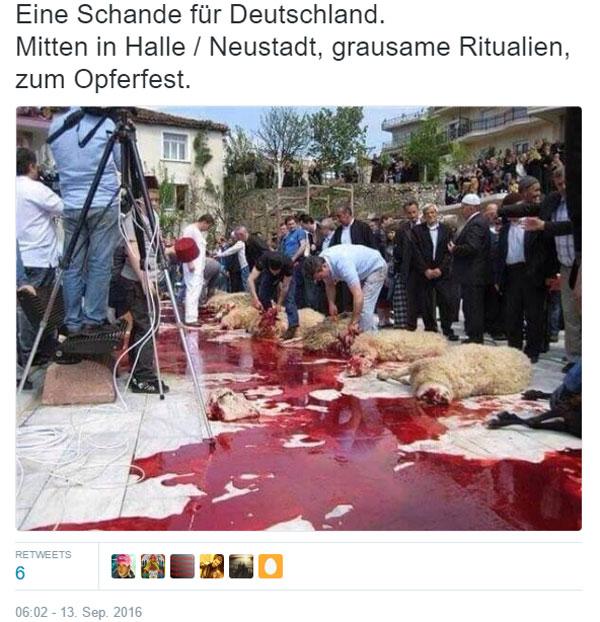 Bild zum Thema Eine Schande für Deutschland. Öffentliches Schächten in Halle / Neustadt, mitten in Deutschland.