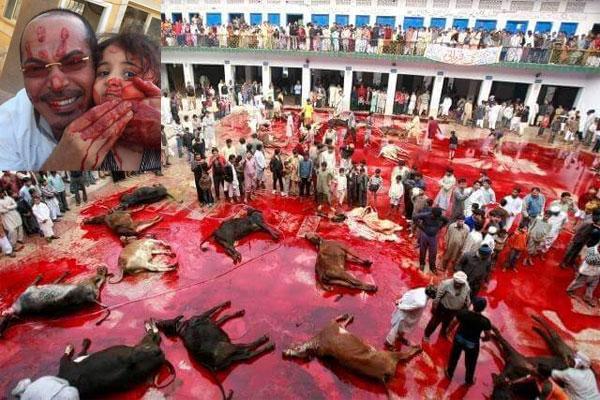 Bild zum Thema Islamisches Opferfest_ Das islamische Opferfest ist der höchste Feiertag der Moslems. Und selbstverständlich fließen Unmengen von Blut brutal geschächteter Tiere