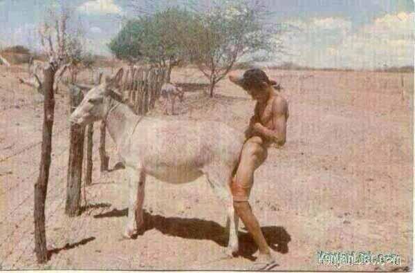Islam Araber oder Nafri als Eselficker #Date:01.2016#
