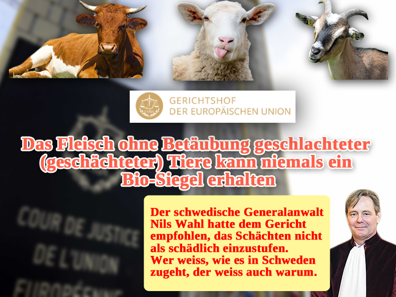 Europäischer Gerichtshof #EuGH entscheidet beim #BioSiegel pro #Tierschutz und #Tierwohl (EuGH, 26.02.2019 - C-497/17)._    Fleisch geschächteter Tiere, also von Tieren, die ohne Betäubung geschlachtet wurden, kann nicht Bio sein. Eine an sich völlig klare und selbstverständliche Sache.  Der mit der Angelegenheit betraute #Generalanwalt Nils #Wahl aus Schweden, hatte dem Gericht eine gegenteilige Entscheidung empfohlen. Das verwundert nicht, wenn man weiss, wie es in Schweden mit seiner jahrzehntelangen grünlinken Regierung jetzt aussieht. Ein Graus für jeden europäischen Patrioten.  Dankenswerter Weise ist der EuGH dem jämmerlichen Unterwerfungskriechen des schwedischen Migrationsfetischisten Wahl nicht gefolgt.  Weitere Informationen zu Ihrer Meinungsbildung finden Sie hier:   https://jungefreiheit.de/politik/ausland/2019/halal-fleisch-darf-kein-bio-siegel-tragen/ #Date:03.2019#