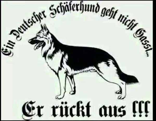 Ein deutscher Schäferhund geht nicht Gassi. Er rückt aus. #Date:01.2016#