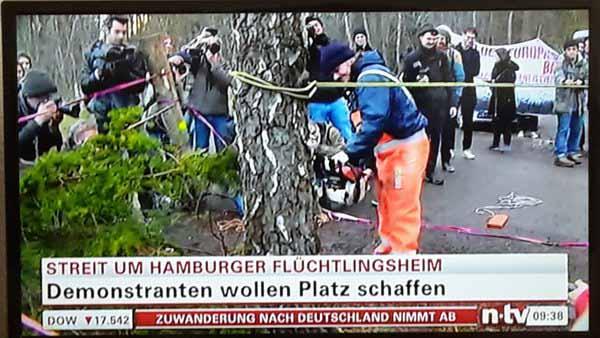 Flutlingsfreunde, Buntmenschen, Gutmenschen fällen illegal Bäume, um Platz für ein Asylantenheim zu schaffen. #Date:04.2016#